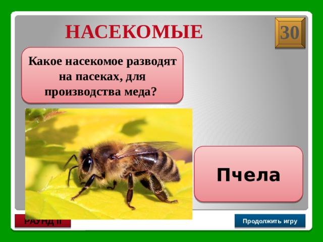 НАСЕКОМЫЕ 30 Какое насекомое разводят на пасеках, для производства меда? Пчела Продолжить игру РАУНД II