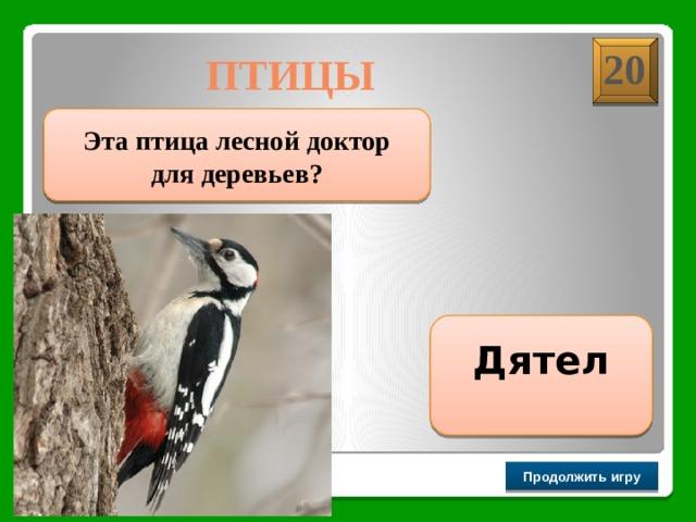 20 ПТИЦЫ  Эта птица лесной доктор для деревьев? Дятел Продолжить игру РАУНД II
