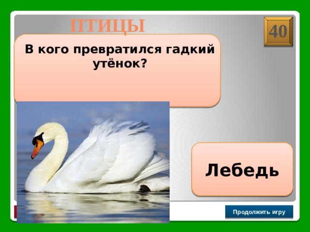 ПТИЦЫ 40  В кого превратился гадкий утёнок? Лебедь Продолжить игру РАУНД II