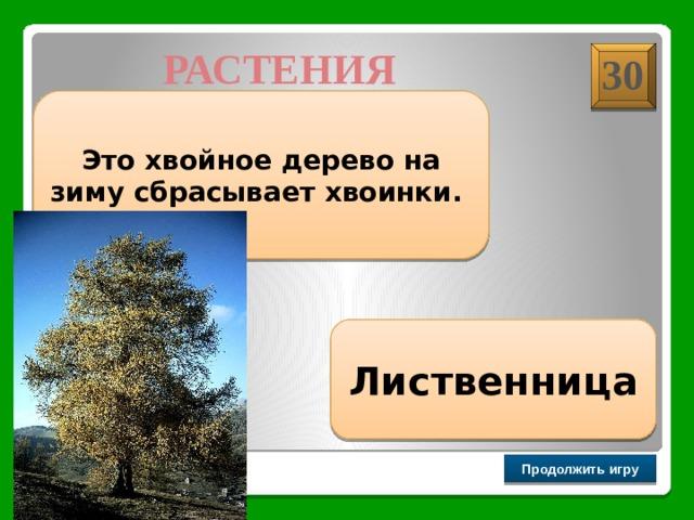 РАСТЕНИЯ 30 Это хвойное дерево на зиму сбрасывает хвоинки. Лиственница Продолжить игру РАУНД II