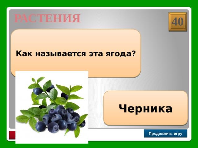 РАСТЕНИЯ 40 Как называется эта ягода? Черника Продолжить игру РАУНД II
