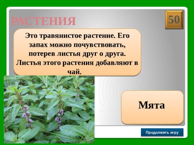 50 РАСТЕНИЯ  Это травянистое растение. Его запах можно почувствовать, потерев листья друг о друга. Листья этого растения добавляют в чай.  Мята Продолжить игру РАУНД II