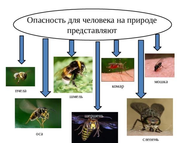 Опасность для человека на природе представляют мошка комар пчела шмель шершень оса слепень