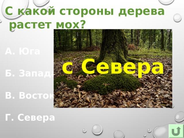 С какой стороны дерева растет мох? А. Юга Б. Запада В. Востока Г. Севера с  Севера