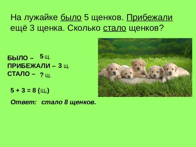 На лужайке было 5 щенков. Прибежали ещё 3 щенка. Сколько стало щенков ? 5 Щ. БЫЛО – ПРИБЕЖАЛИ – СТАЛО –  3 Щ. ? Щ. 5 + 3 = 8 ( Щ .) Ответ : стало 8 щенков.