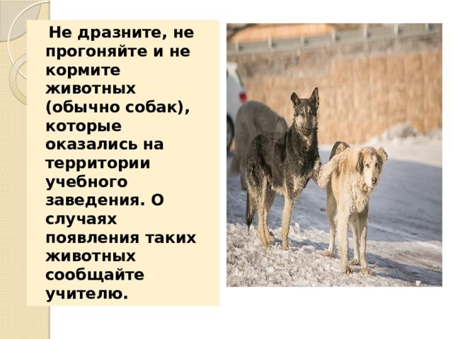 Не дразните, не прогоняйте и не кормите животных (обычно собак), которые оказались на территории учебного заведения. О случаях появления таких животных сообщайте учителю.
