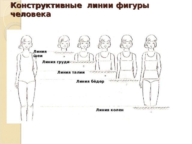 Конструктивные линии фигуры человека Линия шеи Линия груди Линия талии Линия бёдер Линия колен