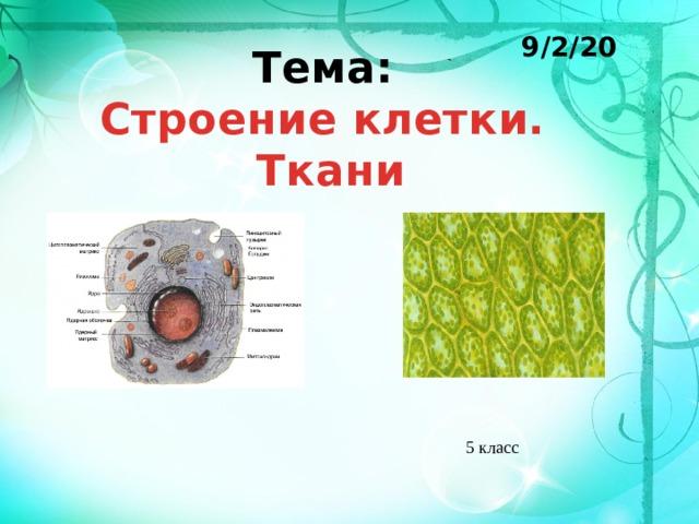 9/2/20 Тема: Строение клетки.  Ткани 5 класс