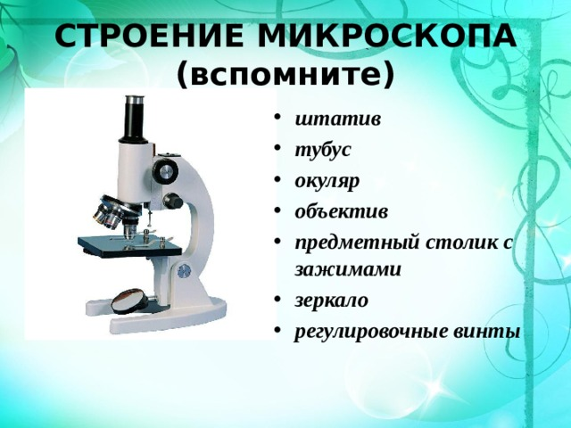 СТРОЕНИЕ МИКРОСКОПА (вспомните) штатив тубус окуляр объектив предметный столик с зажимами зеркало регулировочные винты