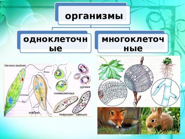 организмы одноклеточные многоклеточные
