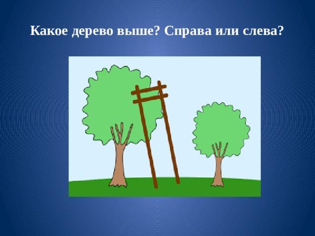 Какое дерево выше? Справа или слева?