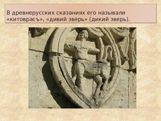 В древнерусских сказаниях его называли «китоврасъ», «дивий зверь» (дикий зверь).