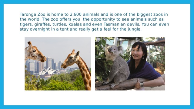 Taronga Zoo is home to 2,600 animals and is one of the biggest zoos in the world. The zoo offers you the opportunity to see animals such as tigers, giraffes, turtles, koalas and even Tasmanian devils. You can even stay overnight in a tent and really get a feel for the jungle.