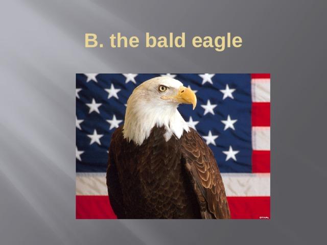 B. the bald eagle