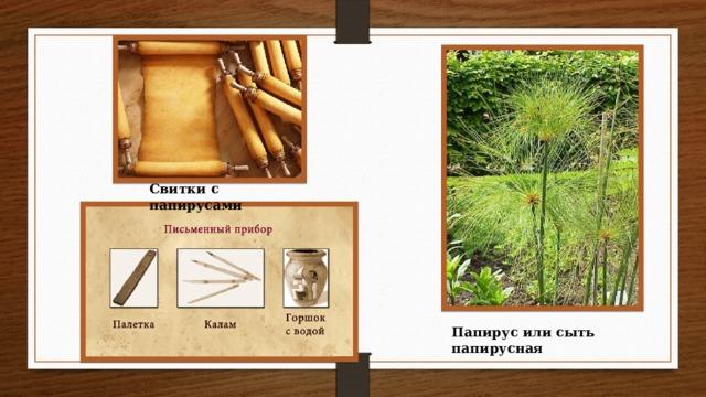 Свитки с папирусами Папирус или сыть папирусная