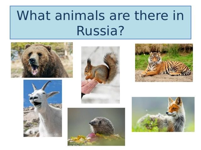 What animals are there in Russia?