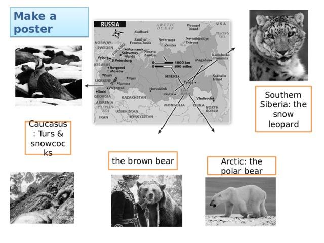 Make a poster Southern Siberia: the snow leopard Caucasus: Turs & snowcocks the brown bear Arctic: the polar bear