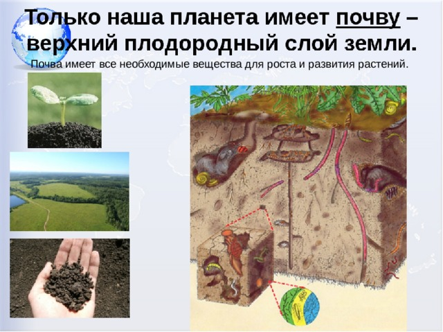 Почва имеет все необходимые вещества для роста и развития растений.