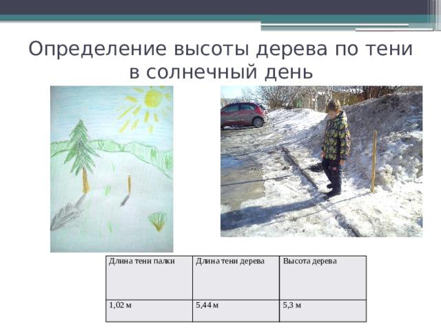 Определение высоты дерева по тени в солнечный день Длина тени палки 1,02 м Длина тени дерева Высота дерева 5,44 м 5,3 м
