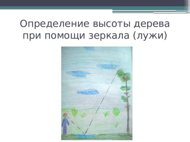 Определение высоты дерева при помощи зеркала (лужи)