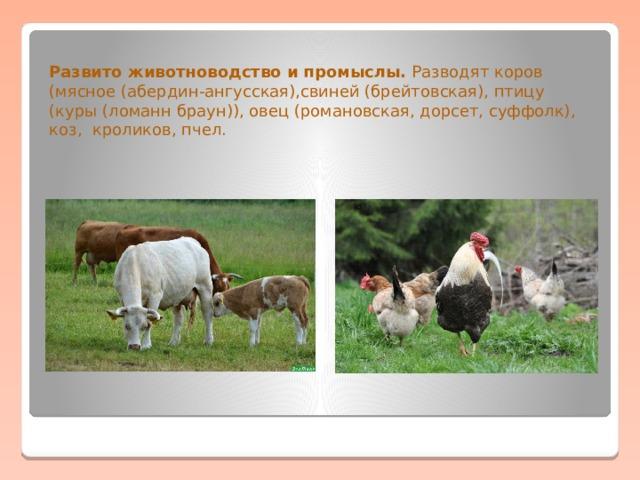 Развито животноводство и промыслы. Разводят коров (мясное (абердин-ангусская),свиней (брейтовская), птицу (куры (ломанн браун)), овец (романовская, дорсет, суффолк), коз, кроликов, пчел.