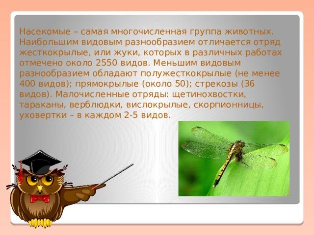 Насекомые – самая многочисленная группа животных. Наибольшим видовым разнообразием отличается отряд жесткокрылые, или жуки, которых в различных работах отмечено около 2550 видов. Меньшим видовым разнообразием обладают полужесткокрылые (не менее 400 видов); прямокрылые (около 50); стрекозы (36 видов). Малочисленные отряды: щетинохвостки, тараканы, верблюдки, вислокрылые, скорпионницы, уховертки – в каждом 2-5 видов.