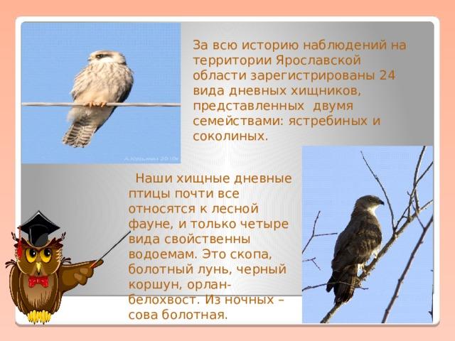 За всю историю наблюдений на территории Ярославской области зарегистрированы 24 вида дневных хищников, представленныхдвумя семействами: ястребиных и соколиных.  Наши хищные дневные птицы почти все относятся к лесной фауне, и только четыре вида свойственны водоемам. Это скопа, болотный лунь, черный коршун, орлан-белохвост. Из ночных – сова болотная.