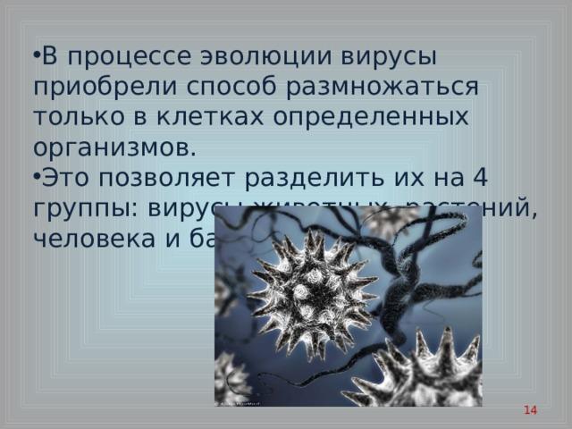 В процессе эволюции вирусы приобрели способ размножаться только в клетках определенных организмов. Это позволяет разделить их на 4 группы: вирусы животных, растений, человека и бактерий.