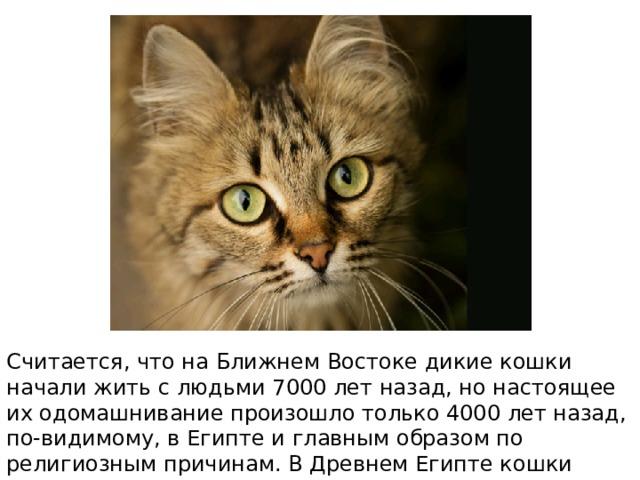 Считается, что на Ближнем Востоке дикие кошки начали жить с людьми 7000 лет назад, но настоящее их одомашнивание произошло только 4000 лет назад, по-видимому, в Египте и главным образом по религиозным причинам. В Древнем Египте кошки почитались, охранялись законом