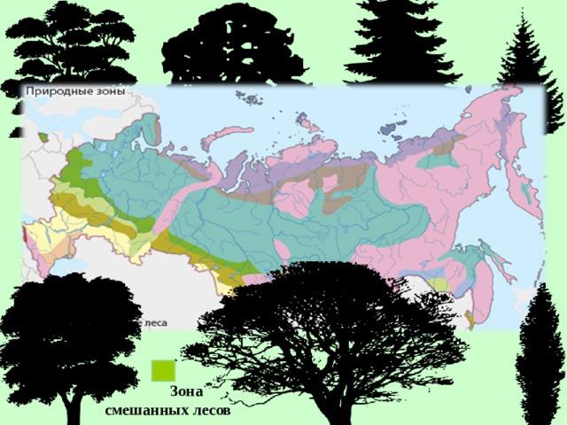 Зона  смешанных лесов
