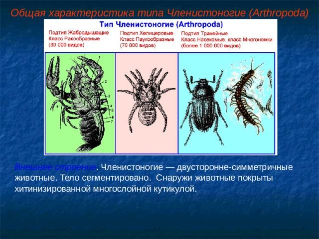 Общая характеристика типа Членистоногие (Arthropoda) Внешнее строение . Членистоногие — двусторонне-симметричные животные. Тело сегментировано. Снаружи животные покрыты хитинизированной многослойной кутикулой.