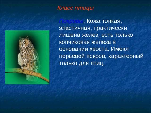 Класс птицы Покровы . Кожа тонкая, эластичная, практически лишена желез, есть только копчиковая железа в основании хвоста. Имеют перьевой покров, характерный только для птиц.