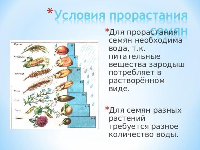 Для прорастания семян необходима вода, т.к. питательные вещества зародыш потребляет в растворённом виде. Для семян разных растений требуется разное количество воды.
