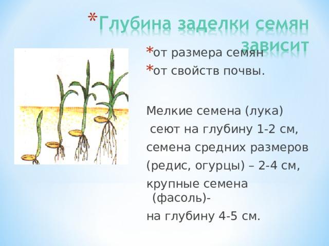 от размера семян от свойств почвы.
