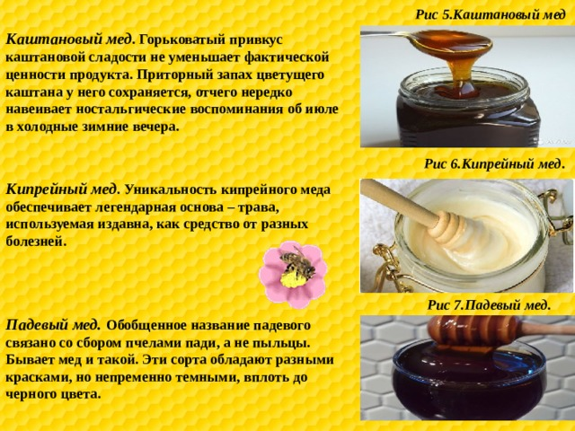 Рис 5.Каштановый мед Каштановый мед . Горьковатый привкус каштановой сладости не уменьшает фактической ценности продукта. Приторный запах цветущего каштана у него сохраняется, отчего нередко навеивает ностальгические воспоминания об июле в холодные зимние вечера. Рис 6.Кипрейный мед . Кипрейный мед . Уникальность кипрейного меда обеспечивает легендарная основа – трава, используемая издавна, как средство от разных болезней. Рис 7.Падевый мед. Падевый мед. Обобщенное название падевого связано со сбором пчелами пади, а не пыльцы. Бывает мед и такой. Эти сорта обладают разными красками, но непременно темными, вплоть до черного цвета.