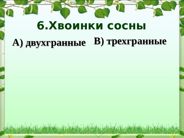 6.Хвоинки сосны   В) трехгранные А) двухгранные