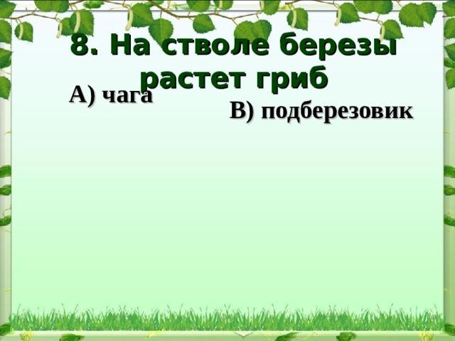 8. На стволе березы растет гриб   В) подберезовик А) чага