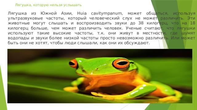 Лягушка, которую нельзя услышать Лягушка из Южной Азии, Huia cavitympanum, может общаться, используя ультразвуковые частоты, который человеческий слух не может различить. Эти животные могут слышать и воспроизводить звуки до 38 килогерц, что на 18 килогерц больше, чем может различить человек. Ученые считают, что лягушки используют такие высокие частоты, т.к. они живут в местности, где шумят водопады и звуки более низкой частоты просто невозможно различить. Или может быть они не хотят, чтобы люди слышали, как они их обсуждают.