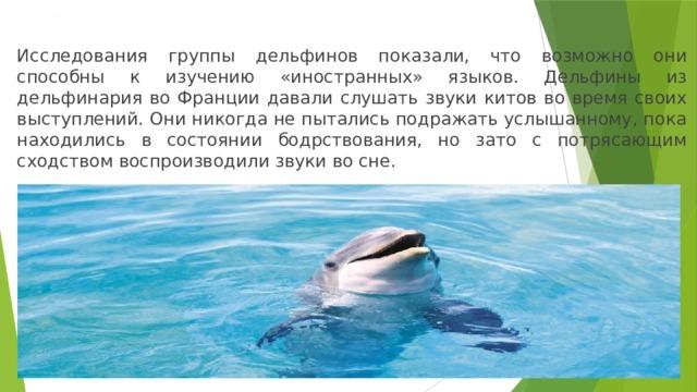 Дельфины и иностранные языки Исследования группы дельфинов показали, что возможно они способны к изучению «иностранных» языков. Дельфины из дельфинария во Франции давали слушать звуки китов во время своих выступлений. Они никогда не пытались подражать услышанному, пока находились в состоянии бодрствования, но зато с потрясающим сходством воспроизводили звуки во сне.