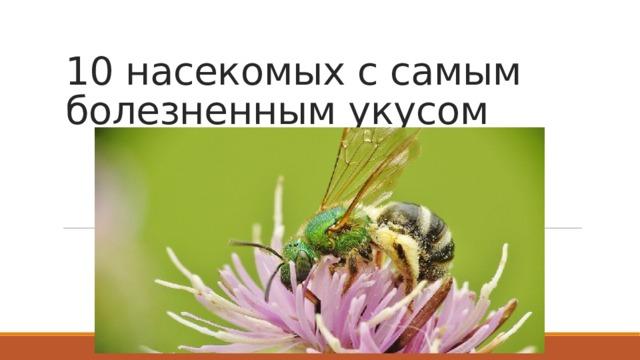 10 насекомых с самым болезненным укусом