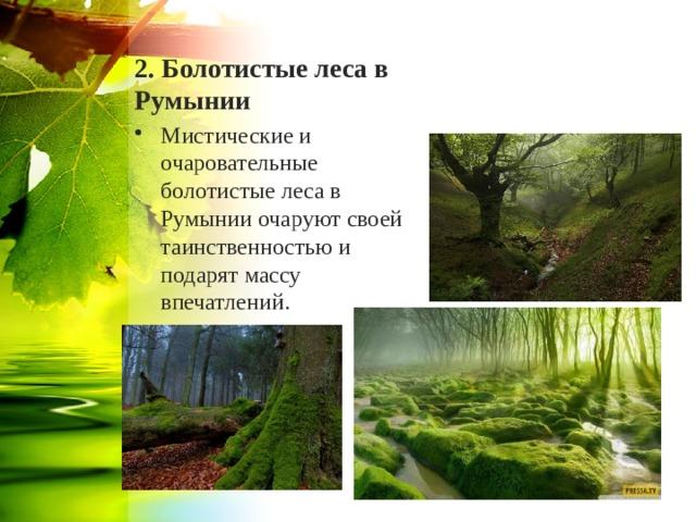 2. Болотистые леса в Румынии
