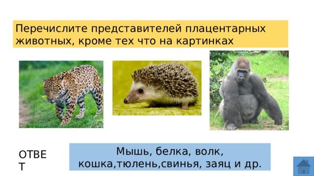 Перечислите представителей плацентарных животных, кроме тех что на картинках Мышь, белка, волк, кошка,тюлень,свинья, заяц и др. ОТВЕТ