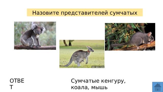 Назовите представителей сумчатых ОТВЕТ Сумчатые кенгуру, коала, мышь