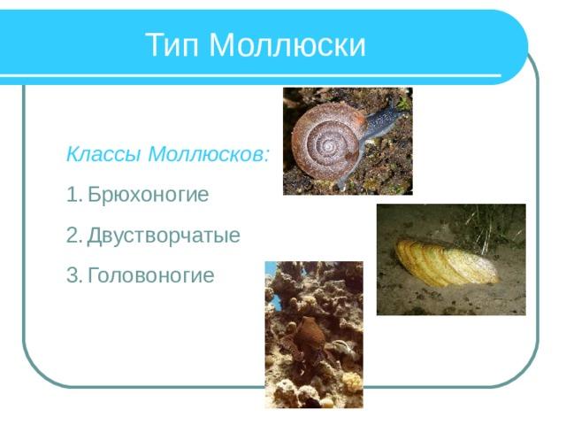 Тип Моллюски Классы Моллюсков: