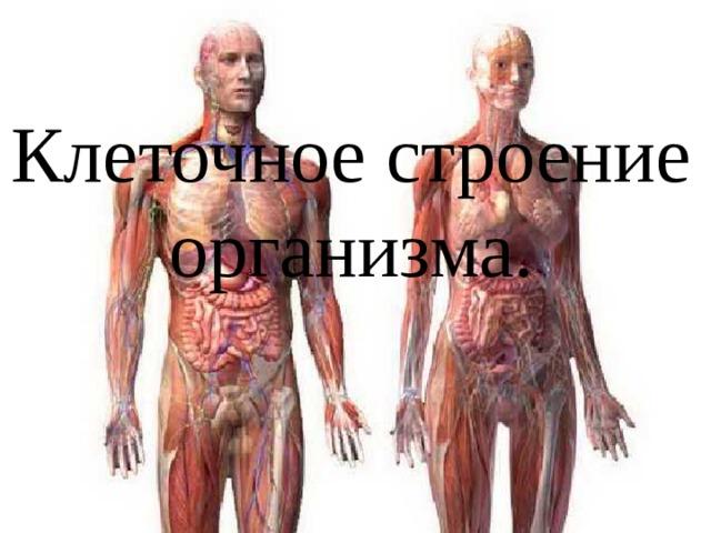 Клеточное строение организма.