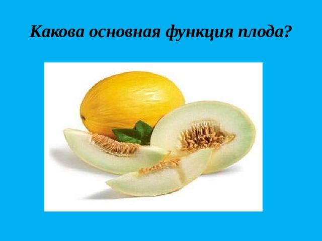 Какова основная функция плода?