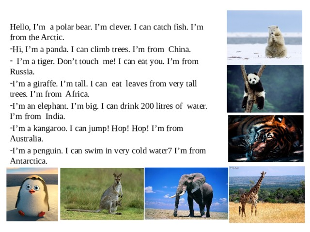 Hello, I'm a polar bear. I'm clever. I can catch fish. I'm from the Arctic. Hi, I'm a panda. I can climb trees. I'm from China.  I'm a tiger. Don't touch me! I can eat you. I'm from Russia. I'm a giraffe. I'm tall. I can eat leaves from very tall trees. I'm from Africa. I'm an elephant. I'm big. I can drink 200 litres of water. I'm from India. I'm a kangaroo. I can jump! Hop! Hop! I'm from Australia. I'm a penguin. I can swim in very cold water7 I'm from Antarctica.