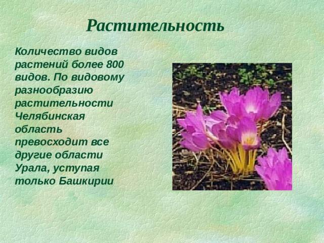 Растительность Количество видов растений более 800 видов. По видовому разнообразию растительности Челябинская область превосходит все другие области Урала, уступая только Башкирии