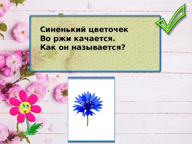 Синенький цветочек Во ржи качается. Как он называется?