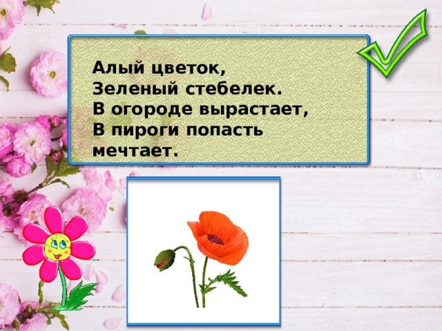 Алый цветок, Зеленый стебелек. В огороде вырастает, В пироги попасть мечтает.